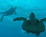 Schildpad en Bert (Marsa Alam) - B. Schillebeeckx